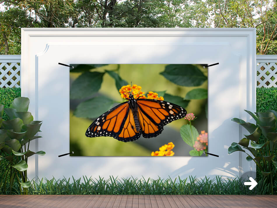 Affiche du jardin des papillons