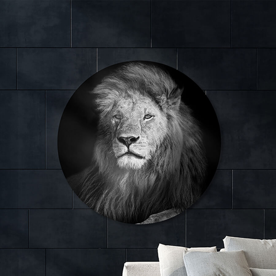 Photo sur Aluminium Beau lion