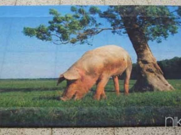 Photo sur Bâche Cochon