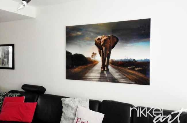 photo sur plexiglas elephant. Black Bedroom Furniture Sets. Home Design Ideas