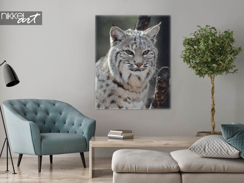 Photo sur Toile Lynx Canadien
