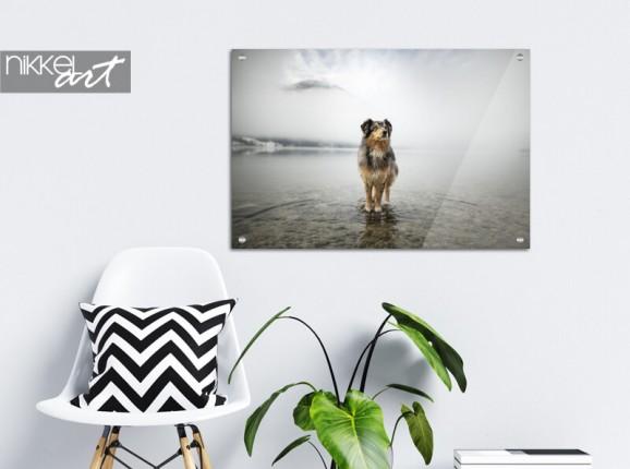 Photo de votre chien sur verre