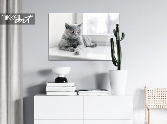 Photo de votre chat sur plexiglas