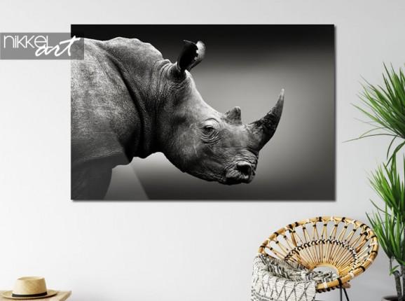 Rhinocéros sur plexiglas