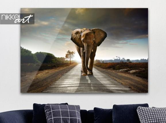 Éléphant sur plexiglas
