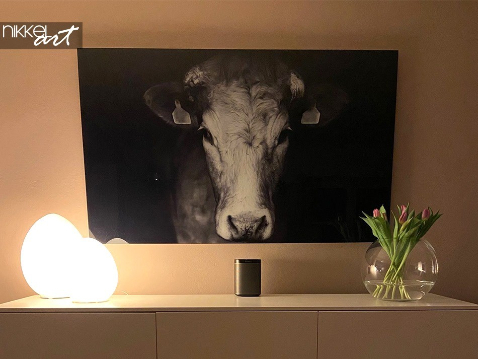 Photo sur Plexiglas Vache
